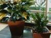 Buckhead Grand lobby planters