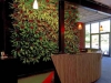 green wall in reception area