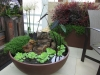indoor-container-gardening