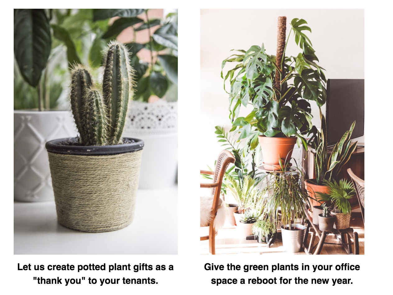 "Let us create potted plant gifts as a ""thank you"" to your tenants. Give the green plants in your office space a reboot for the new year."